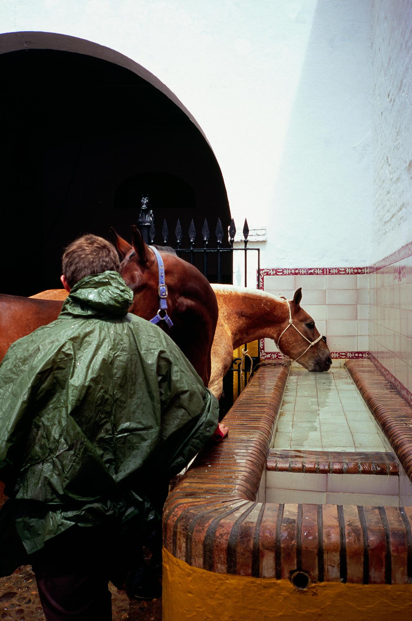 Boy Leading a Horse, Seville, 2016