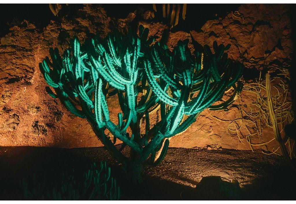 054-boda-diseño-jardin-cactus.jpg