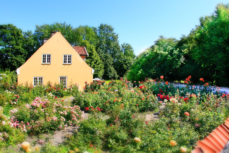 Den imponerende rosehagen på Røed Gård