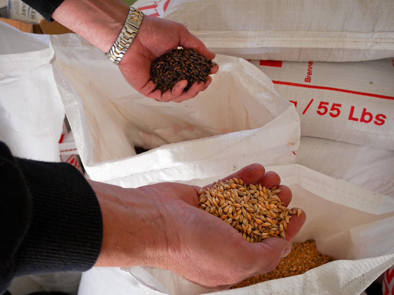 Humle og malt – gode råvarer betyr alt. Malt kjøpes fra Tyskland, mens humle handles inn fra flere europeiske land.