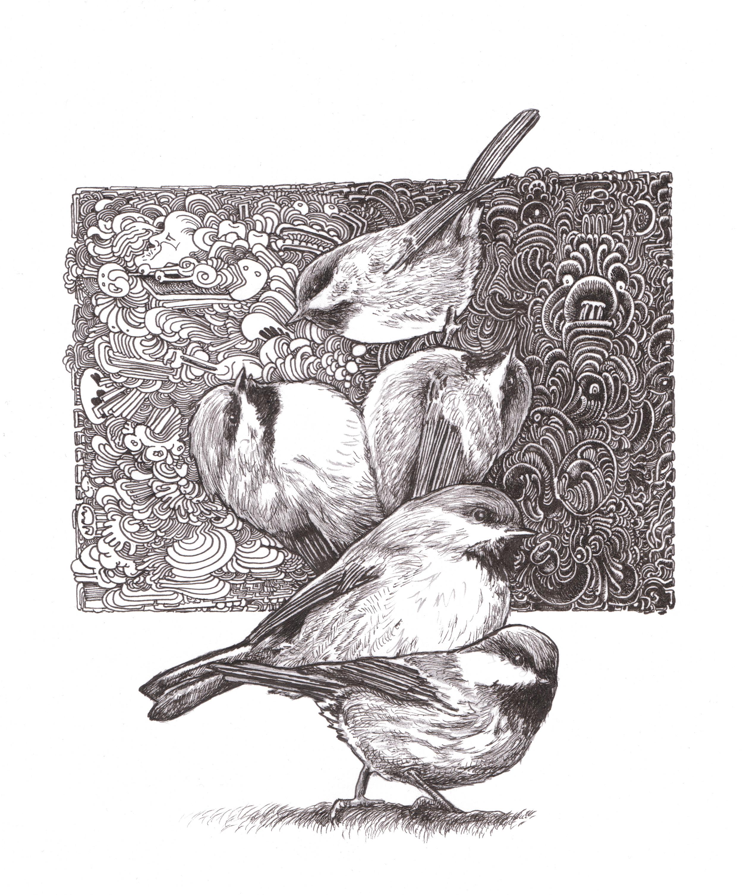 Borel Chickadee