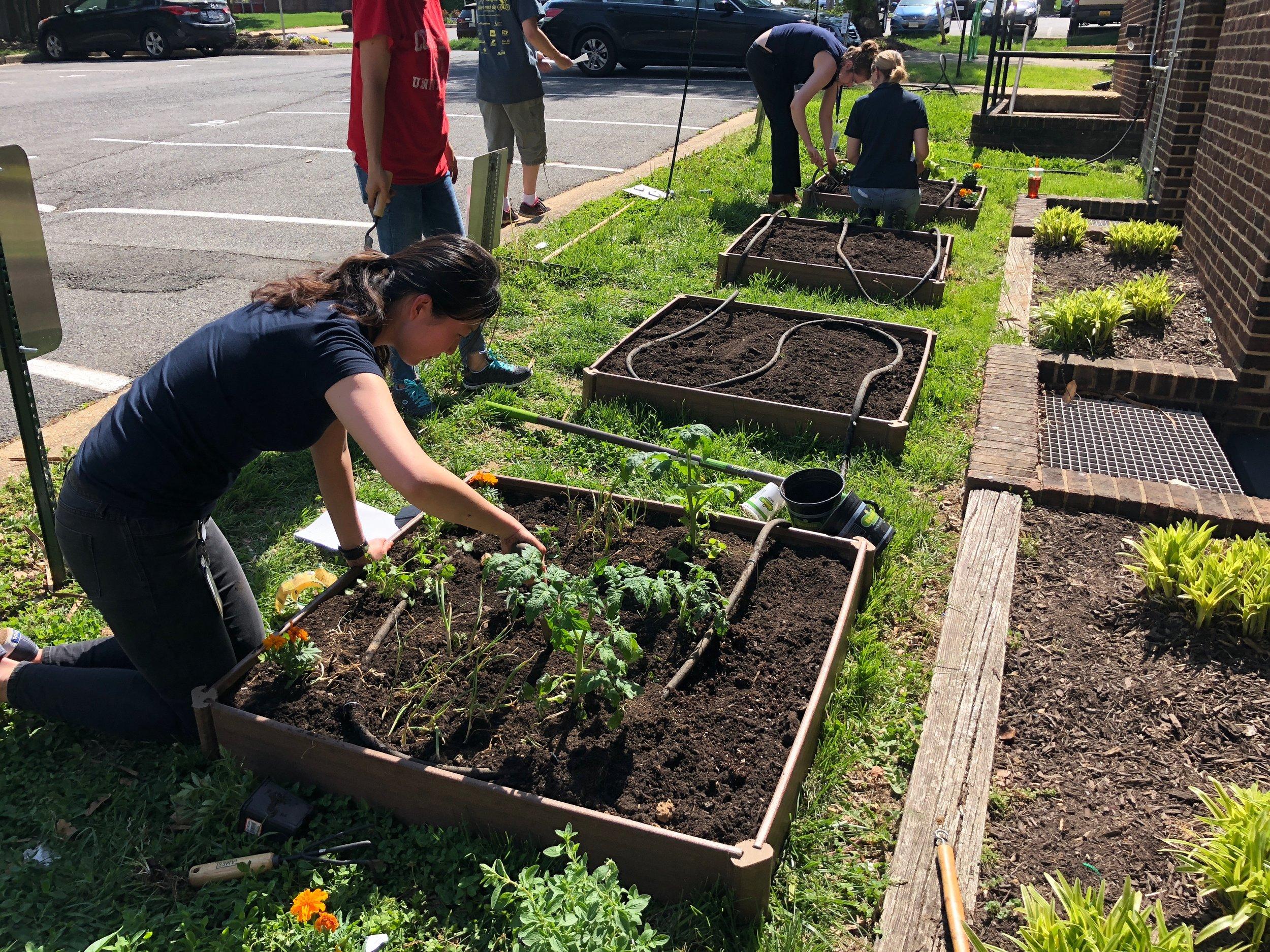 Planting Community Garden at temporary City Hall.JPG