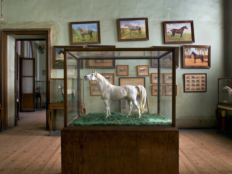 Cairo Horses 30x40f.jpg