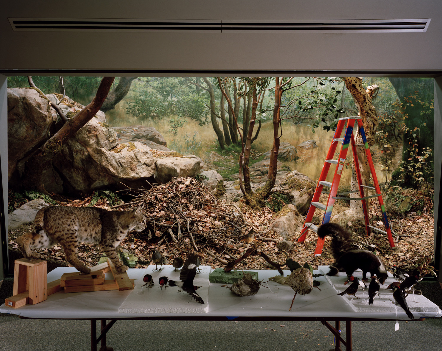 Diorama with Bobcat Removal, 2005