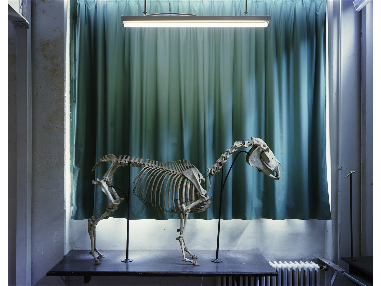 Horse 2005, Musee Fragonard, Paris