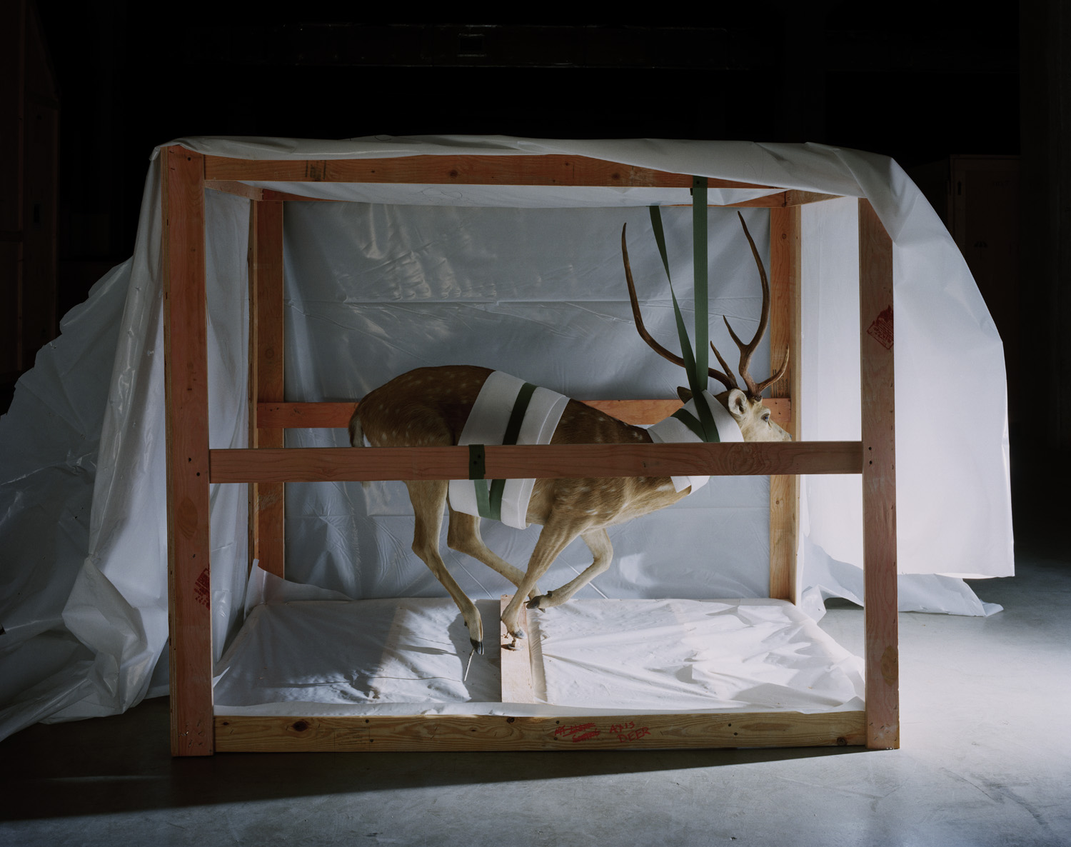 Smithsonian Suspended Deer, 2005