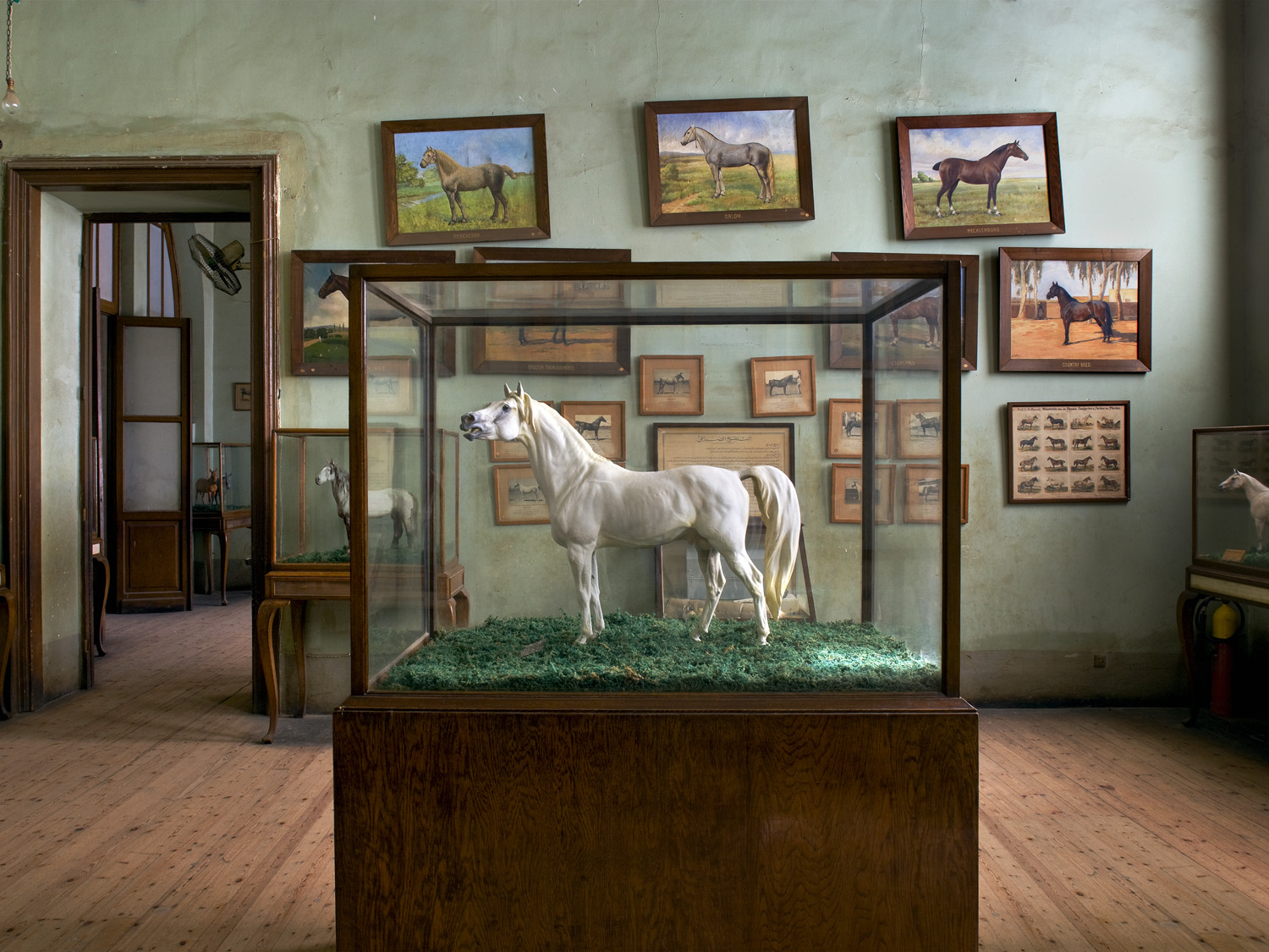 Horses, The Agriculture Museum in Cairo, 2007