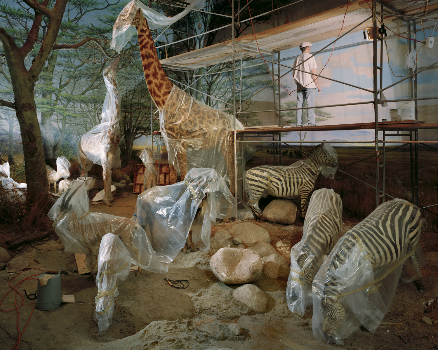 Academy Animals With Painter, 2004