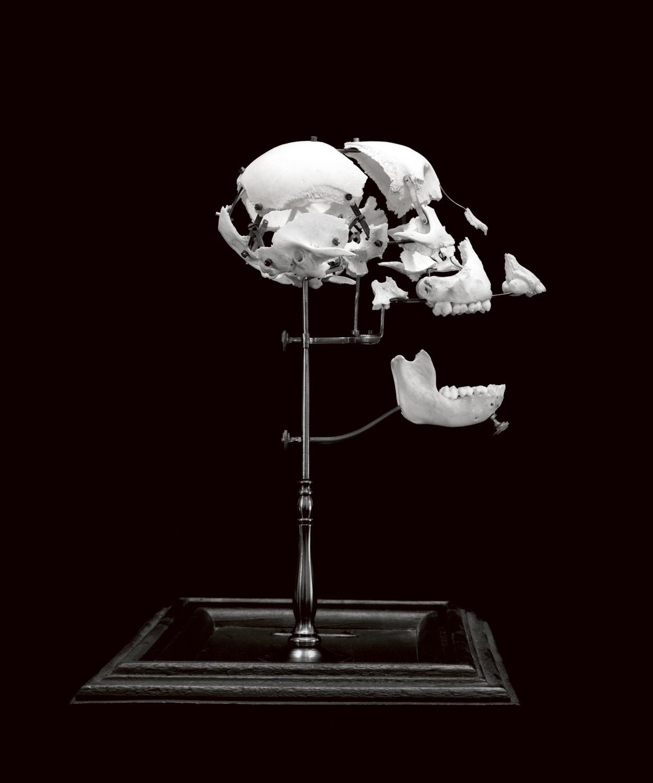 Ape, 2004