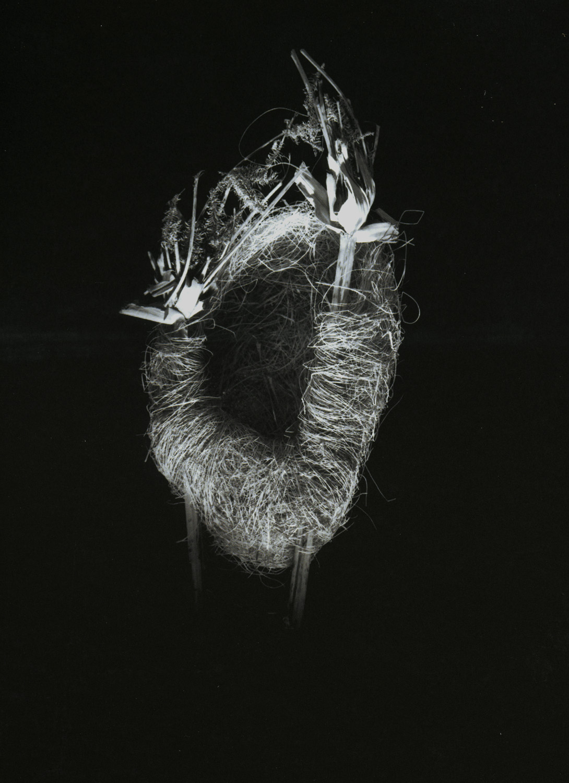 Nest #2, 2000