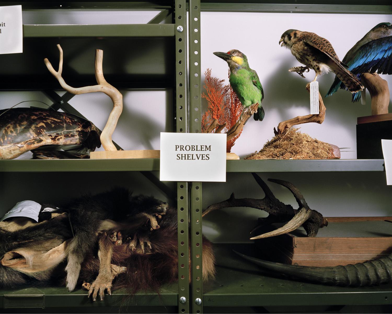 Problem Shelves.jpg
