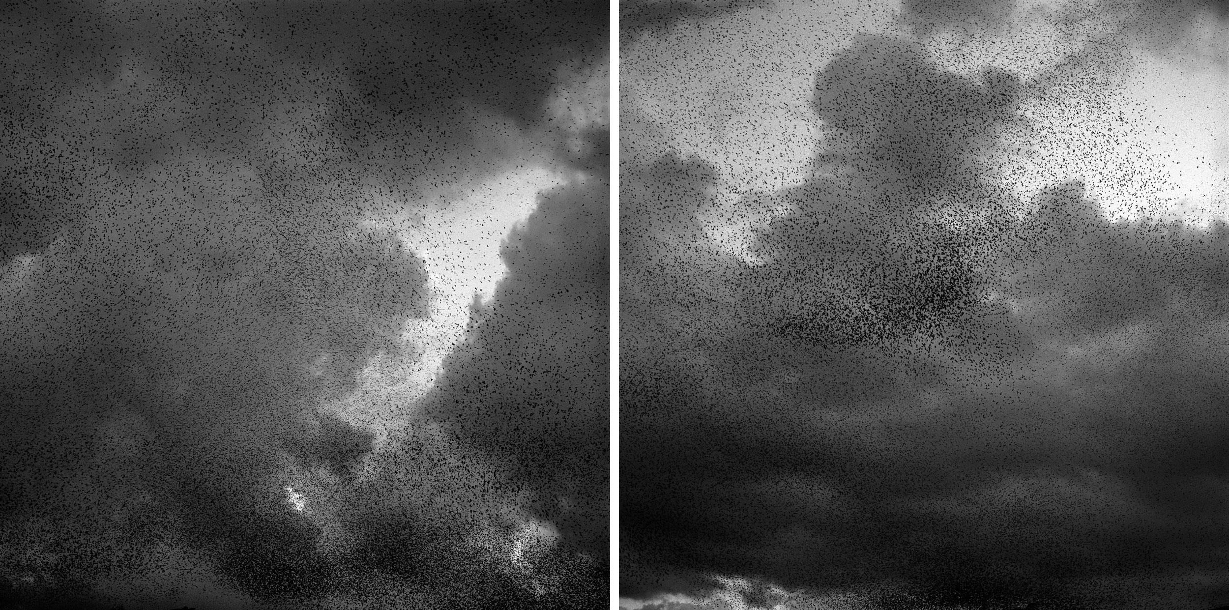 Murmur Diptych, 2005