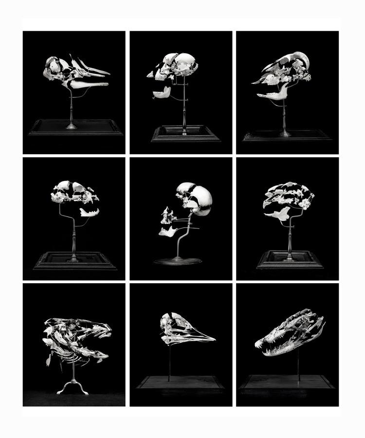 Grid of Skulls, 2006