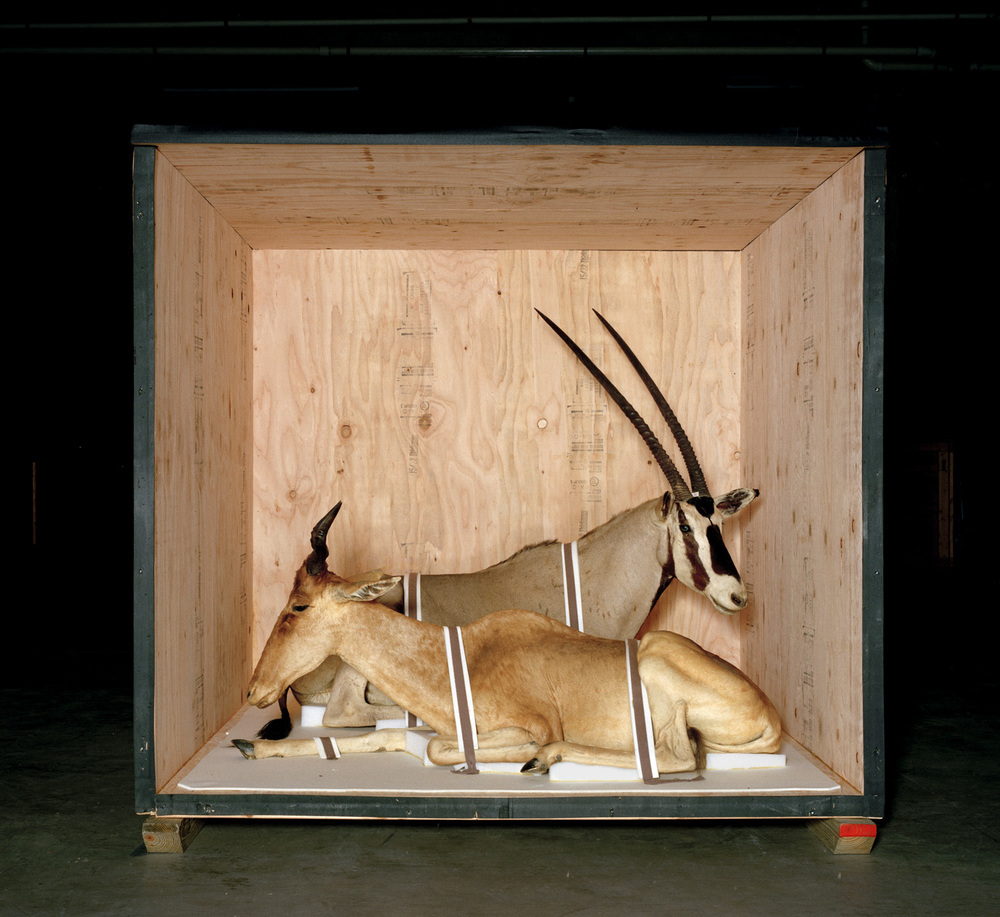 Smithsonian Antelope, 2005