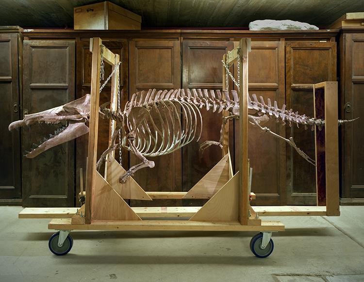 Whale Armature.jpg