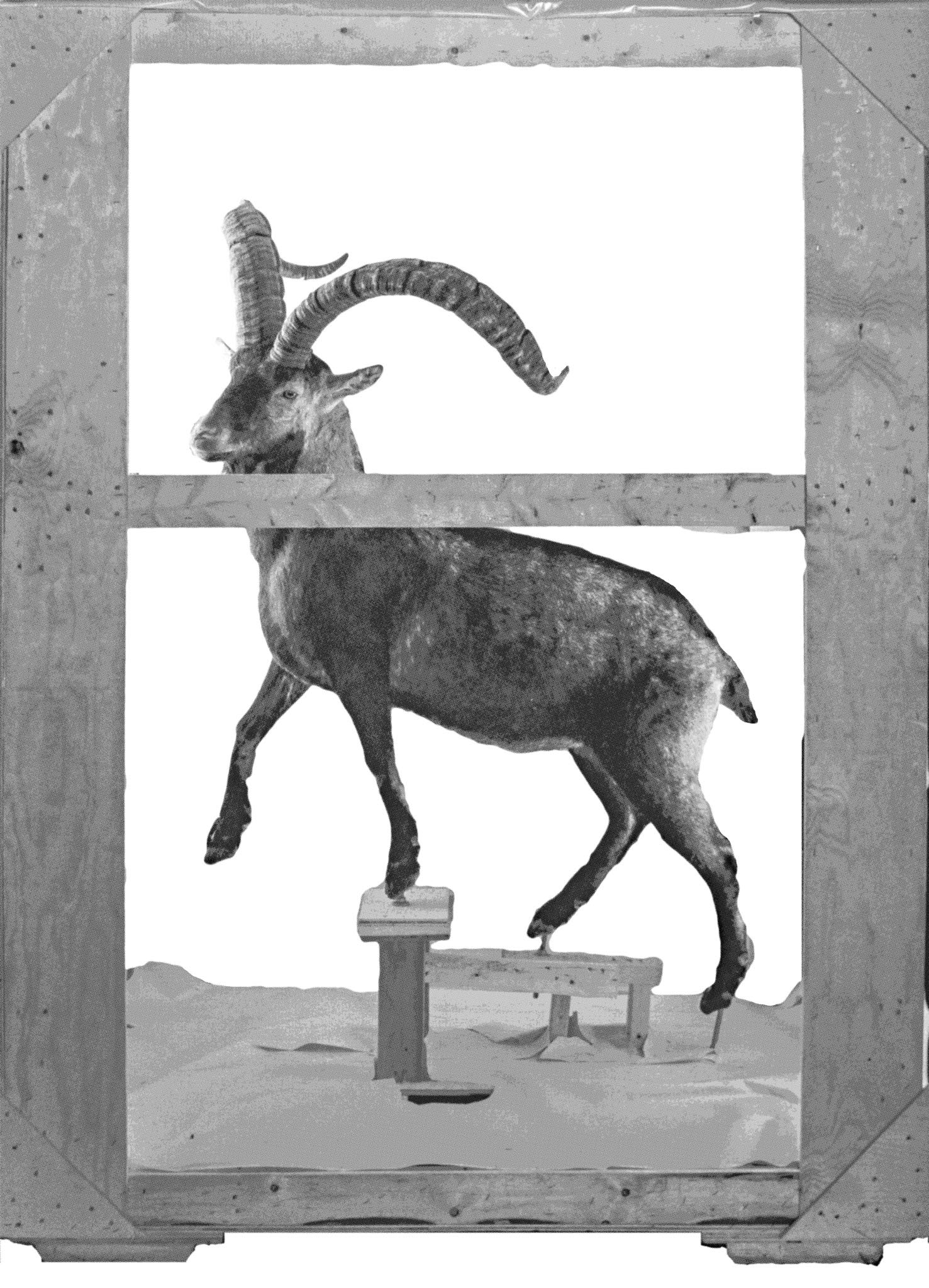 """Smithsonian Ungulate"" for the exhibition pamphlet, designed by John Phillip Sage"