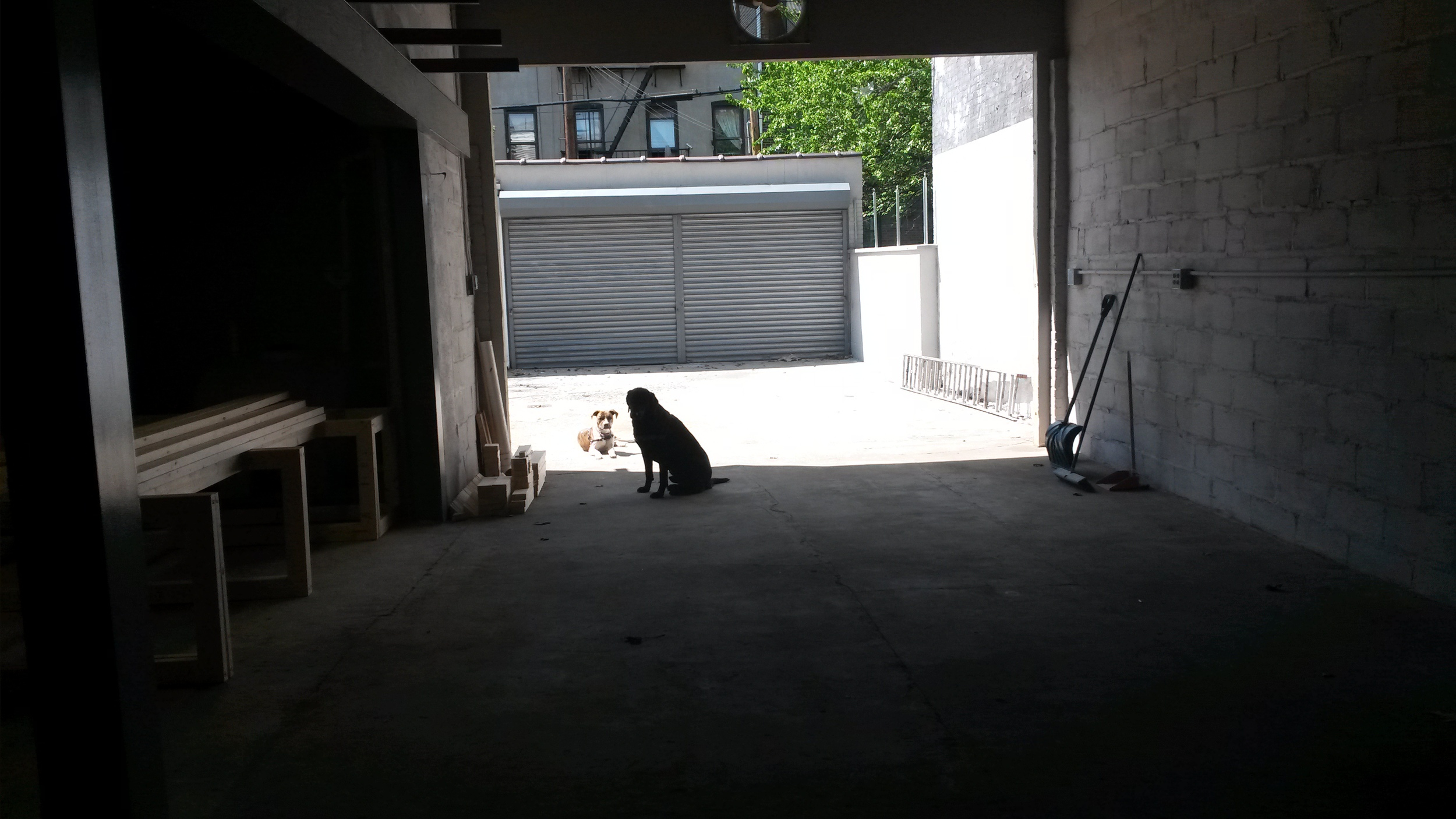 Lola and Camper survey the raw space