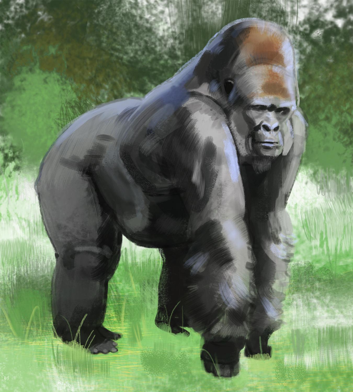 gorilla_-_Yihyoung_Li.jpg