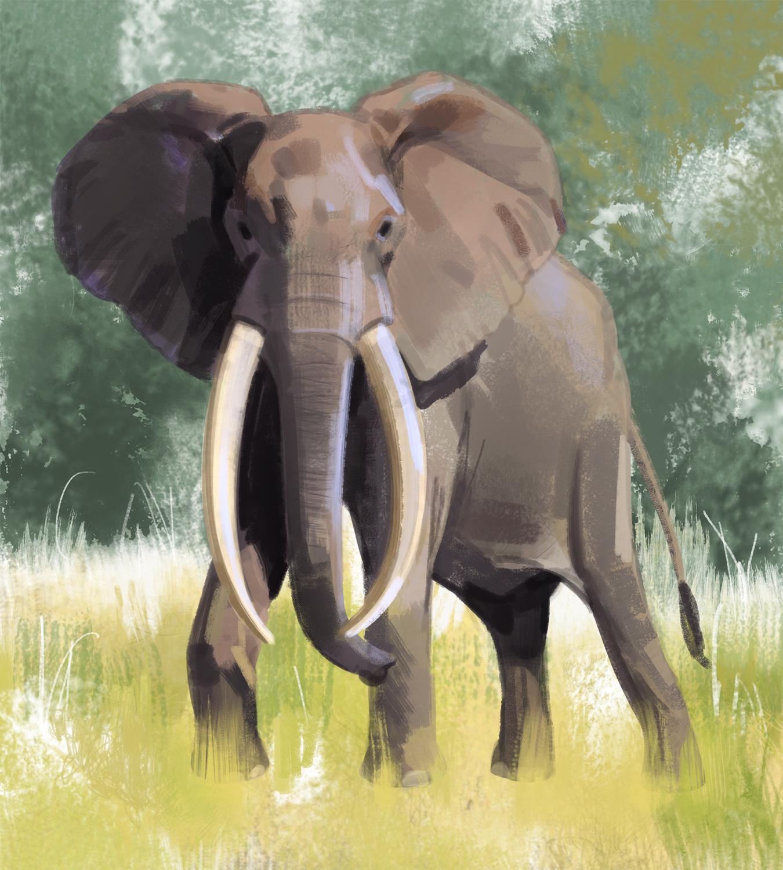 elephant_-_Yihyoung_Li.jpg