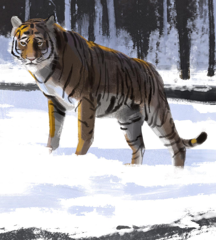 tiger_-_Yihyoung_Li.jpg