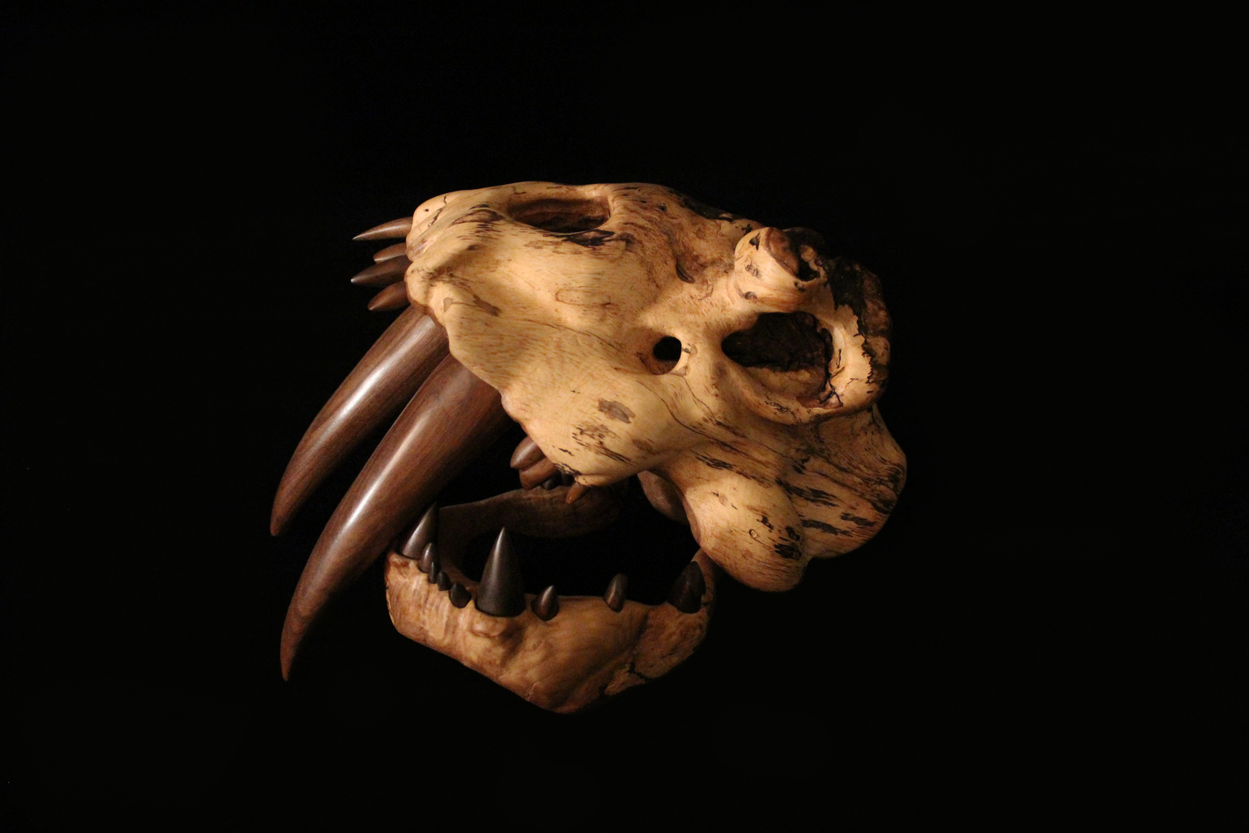 "Sabertooth Burl, 2012. 8"" x 12"" x 12"" Carved Spalted White Oak burl, Walnut. Available, contact for price."