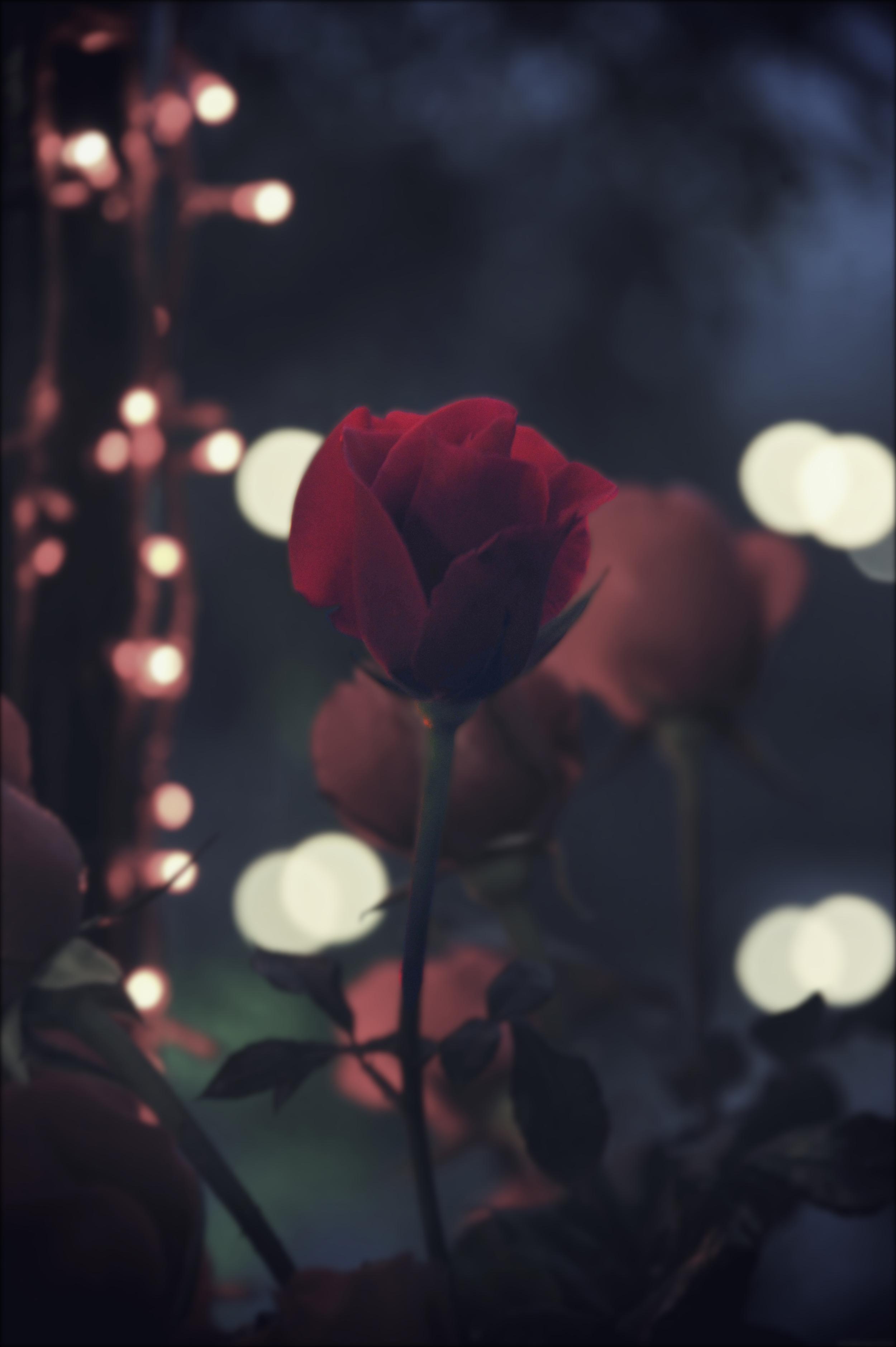rose_effected.jpg