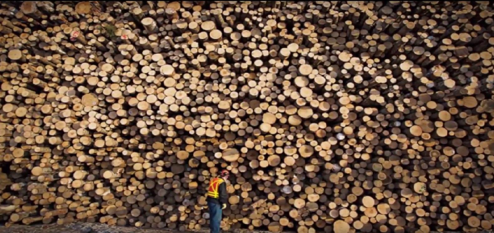 Softwood lumber.jpg