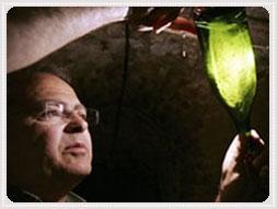 Fakta champagnetillverkning
