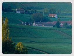 Vindistriktet Champagne  Regionen Champagne  Ardennerna,Marne,Aube,Haute Marne