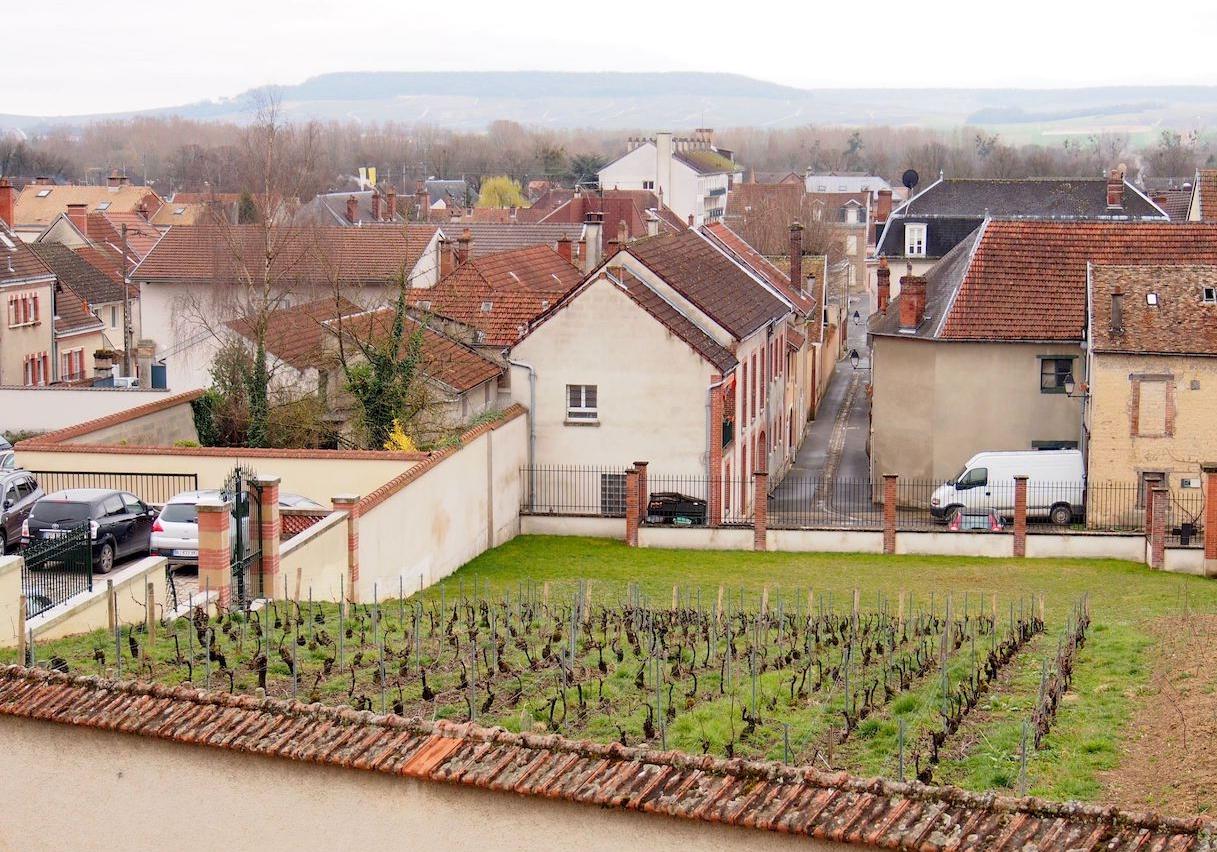 Vieilles Vignes Française