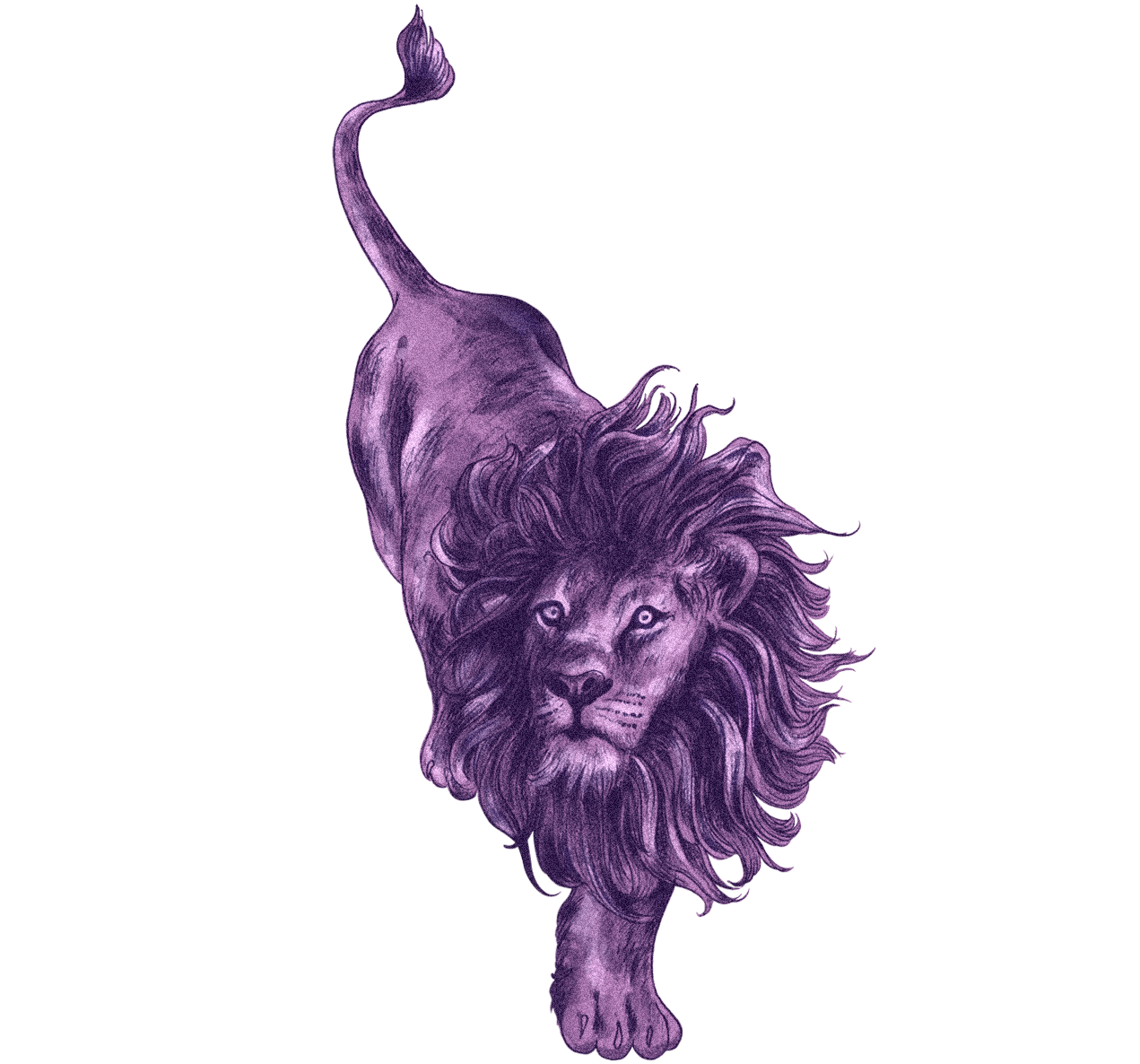 lion-error.png