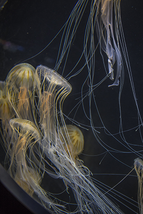 Jellyfish Streamers