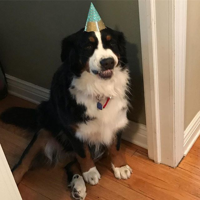 """It's not even my birthday"" - Willow @minniemcavoyandwillow"