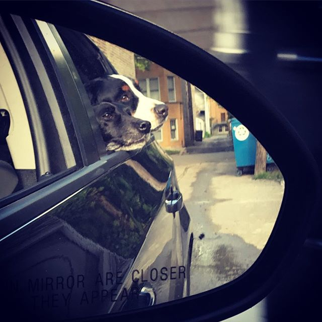 The objects in the mirror couldn't be happier.