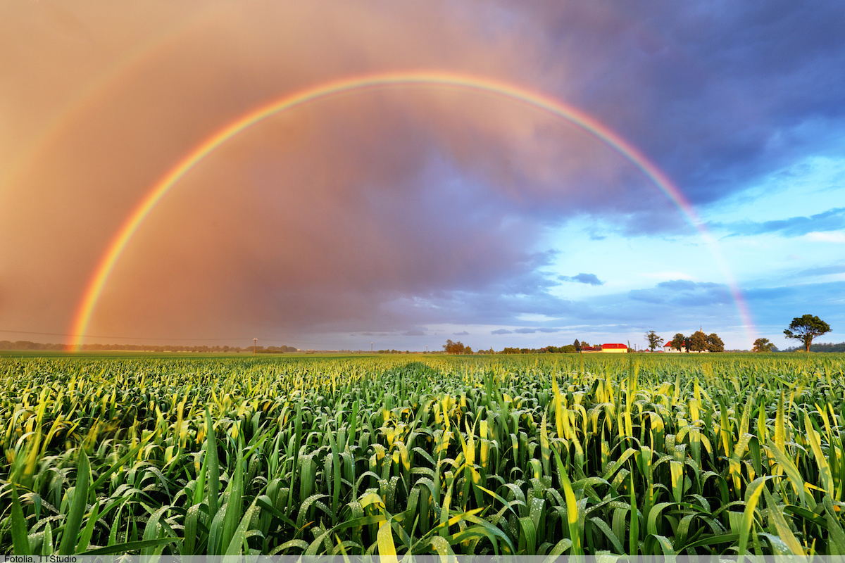 Rainbow over wheat field, nature landscape