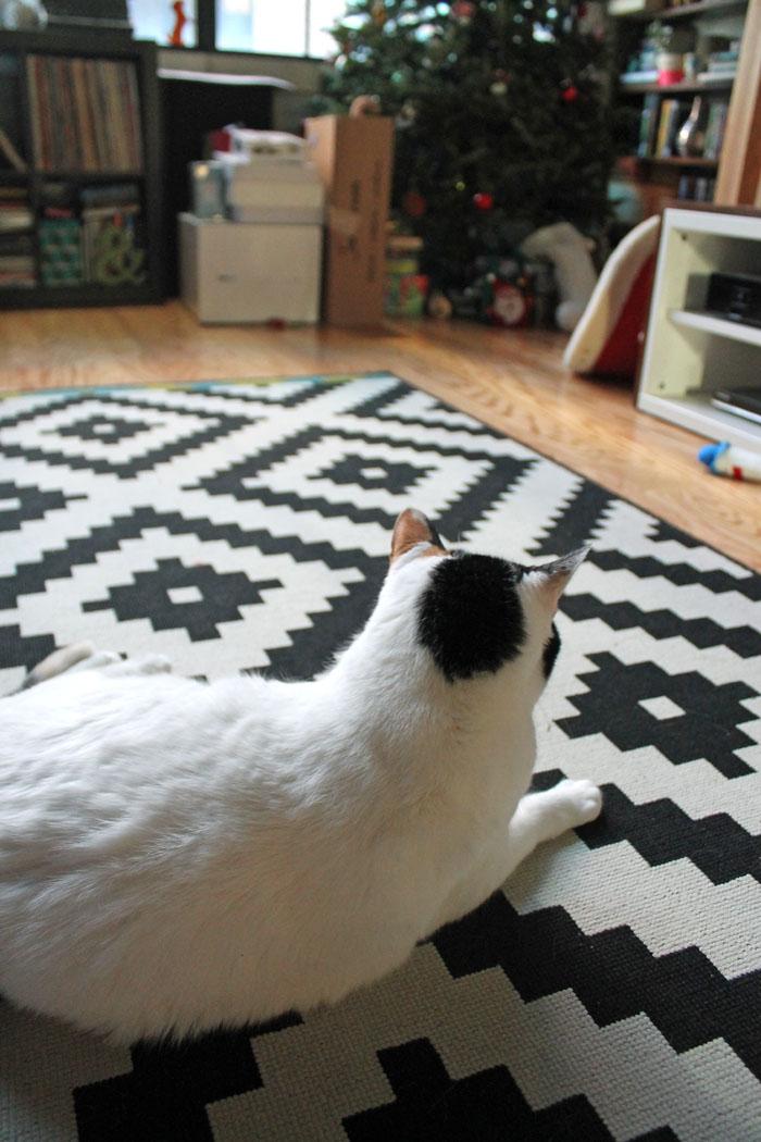 December Cat 3.jpg