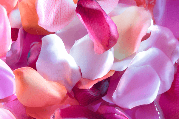 petals-resized-600.png