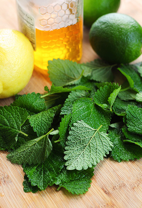 honey-lemon-balm-lemonade-1-resized-600.png