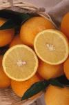 oranges-3090670.jpg.png