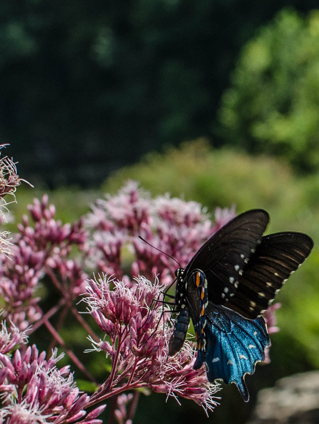 Butterfly and Flowers Rock Island, TN