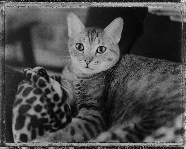 That one time I had a box of #fp100b and shot it with my #omegaview  #filmisnotdead #filmcommunity #filmphotography #filmphotographic #staybrokeshootfilm #webelieveinfilm #analogtalkpodcast #savepackfilm #catsofinstagram #cat #franklintn #nashville