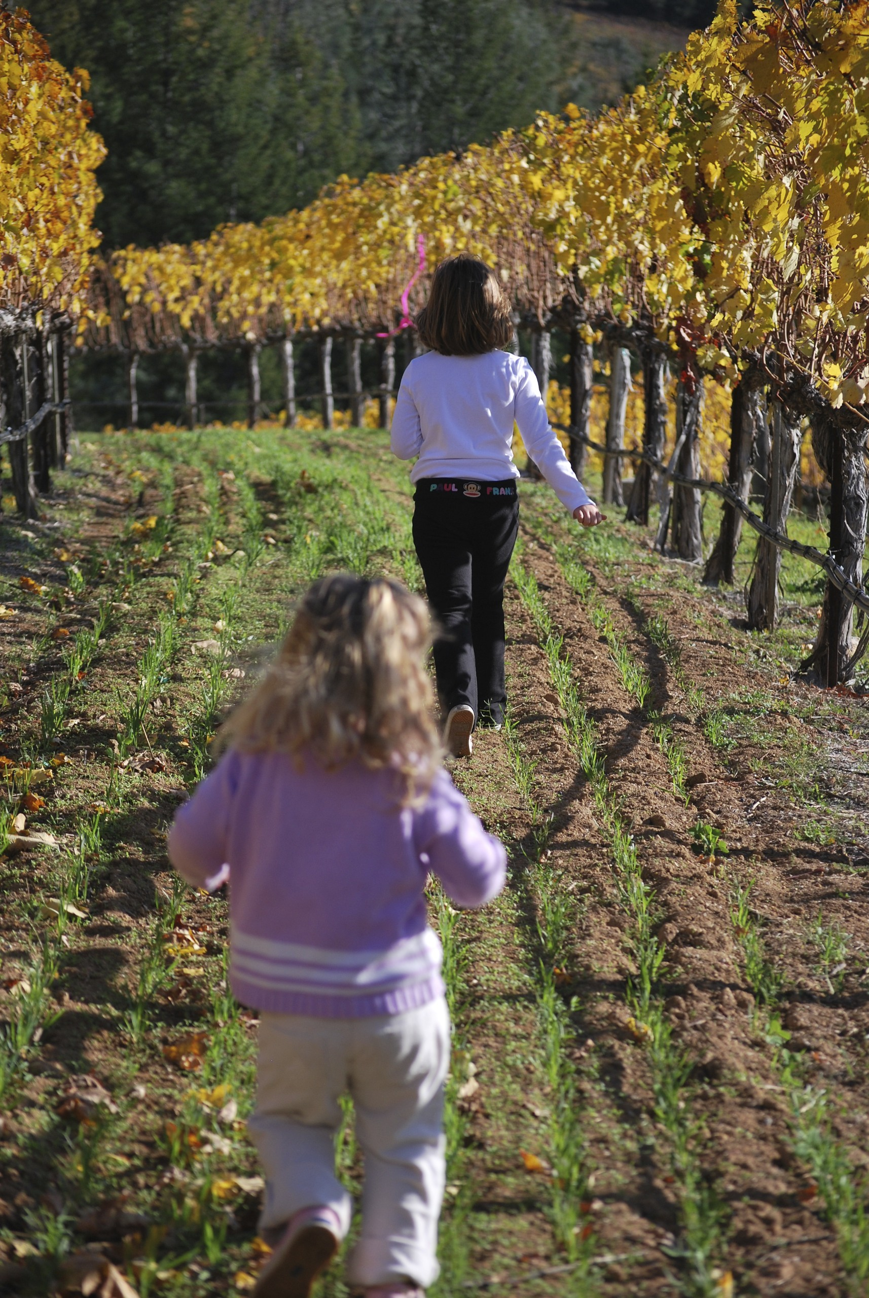 Grandkids in the Vineyard