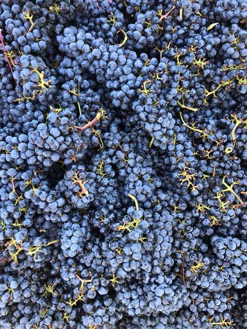 2018 Grapes.jpg
