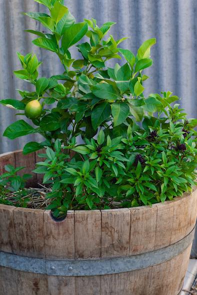 blog-herb-garden.jpeg