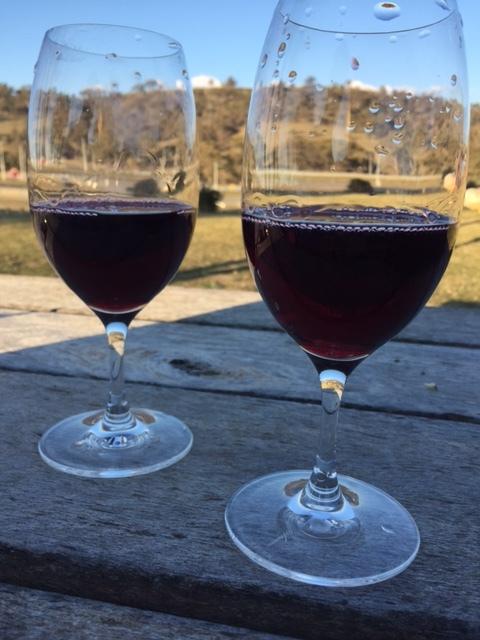Enjoy a glass of wine at one of Canberra's gorgeous vineyards (photo taken at Mount Majura Vineyard)