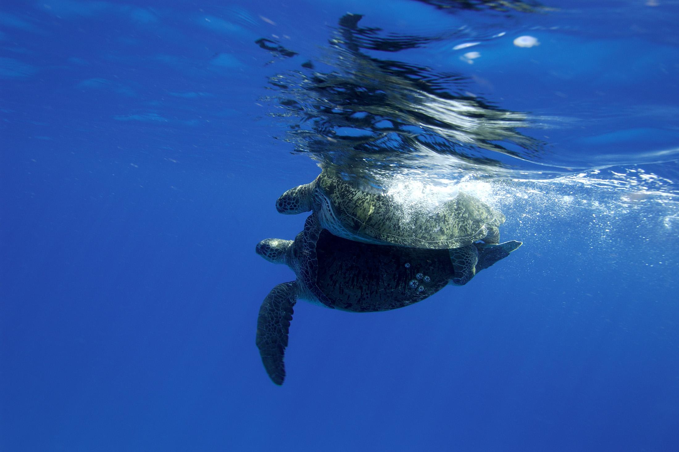 Photo courtesy of the Seychelles Islands Foundation.