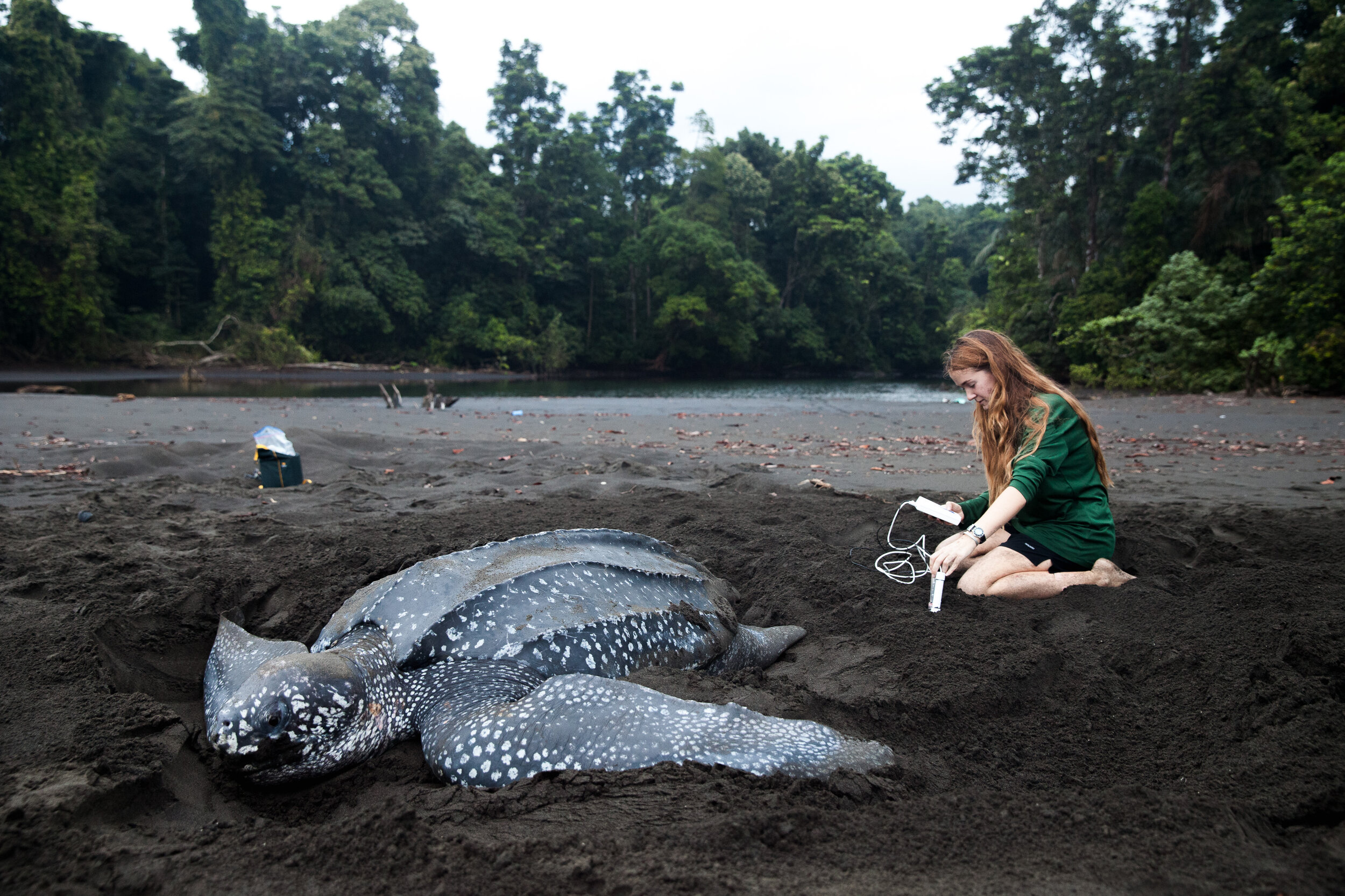 Callie Veelenturf at a leatherback turtle nest in Africa