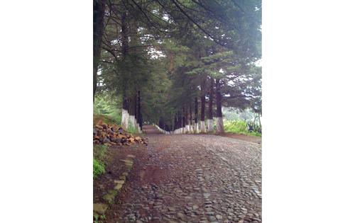 A beautiful nature walk on the outskirts of Patzcuaro