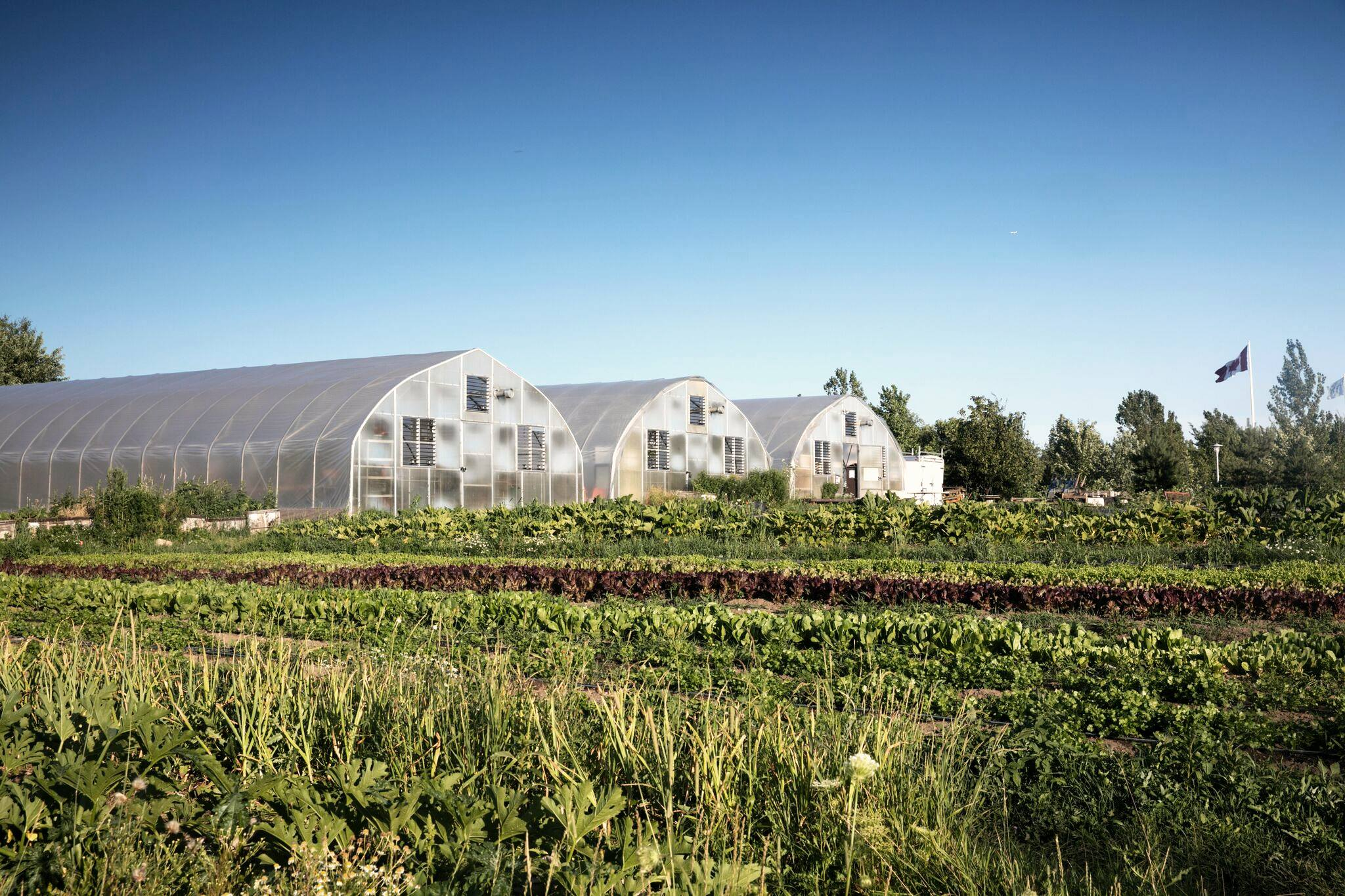 Farms at Downsview Park. Photos: Fresh City Farms