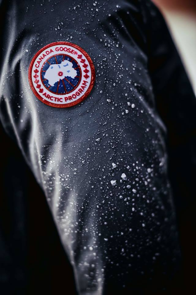 photo: canada goose via facebook